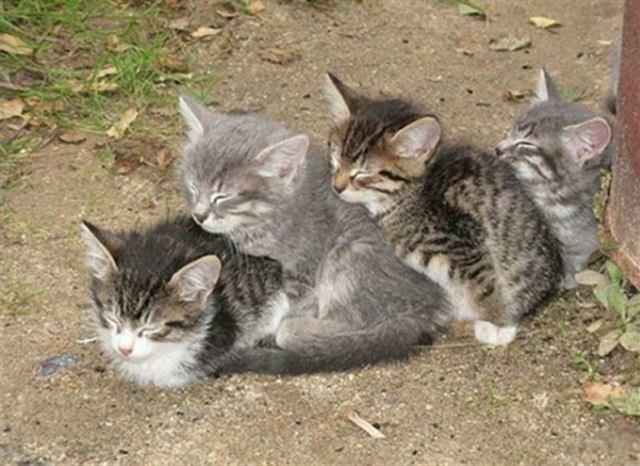Котейки спящие в странных и неожиданных местах