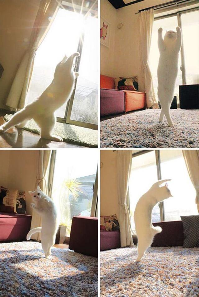 Котики просто кайфуют, греясь на солнышке