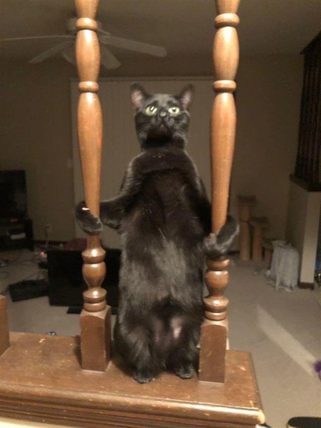 Иногда поведение котов не поддаётся совершенно не какой логике