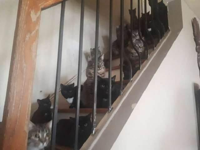 «По уши в котятах»: в доме женщины было обнаружено 120 мурлык