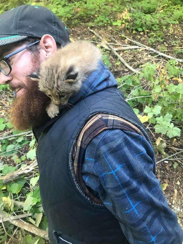 Дикий котенок попросил о помощи человека и тот не смог отказать