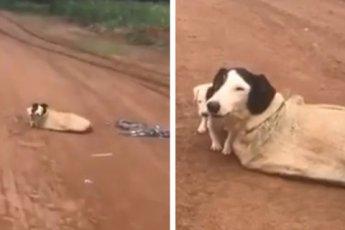 Мужчина спас собаку и ее щенков, брошенных в мешке на дороге
