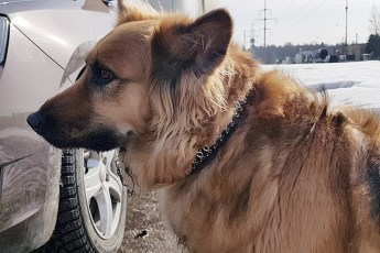 Хозяин высадил собаку из машины и уехал. Она бежала вслед за авто, не понимая, что ее предали