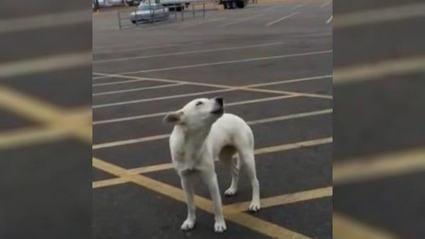 Брошенный пес на стоянке выл от горя 9 дней, но потом еще раз поверил людям
