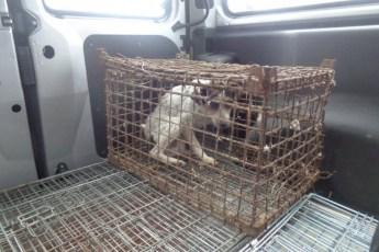 Польские волонтеры спасли собаку, практически разучившуюся ходить