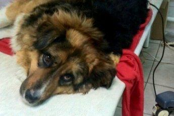 Во время пожара бездомная собака кинулась спасать людей