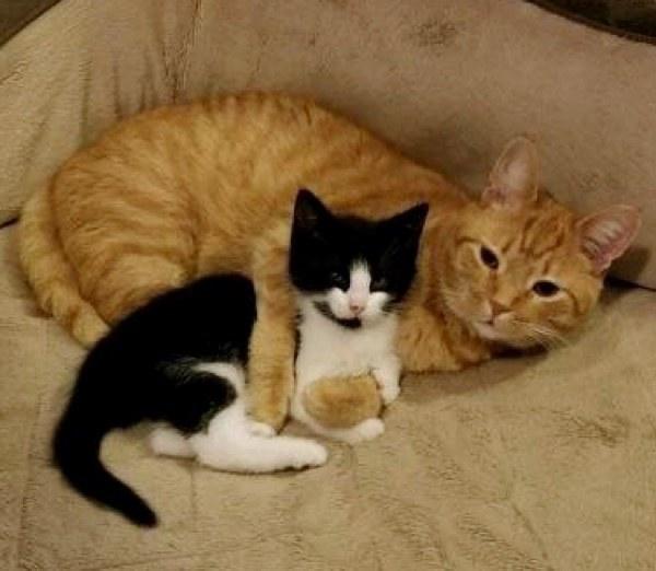Мужчина спас котенка и хотел отдать го другим людям, но его кот решил иначе