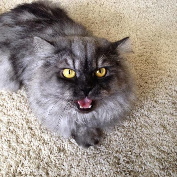 Странные вещи, которые делают все владельцы котов, но не признаются в этом