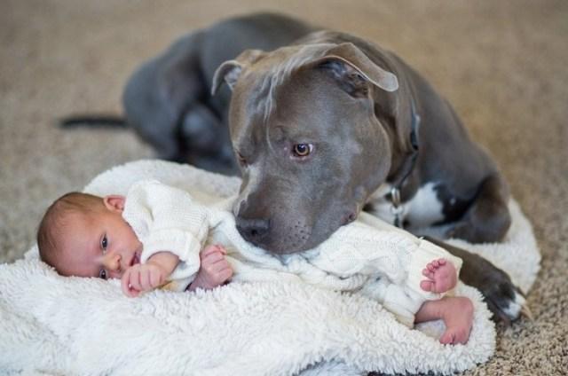 15 доказательств того, что домашние питомцы готовы на все ради защиты малышей
