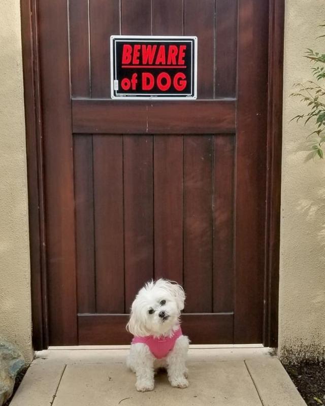 Осторожно, кажется злые собаки, наверное...