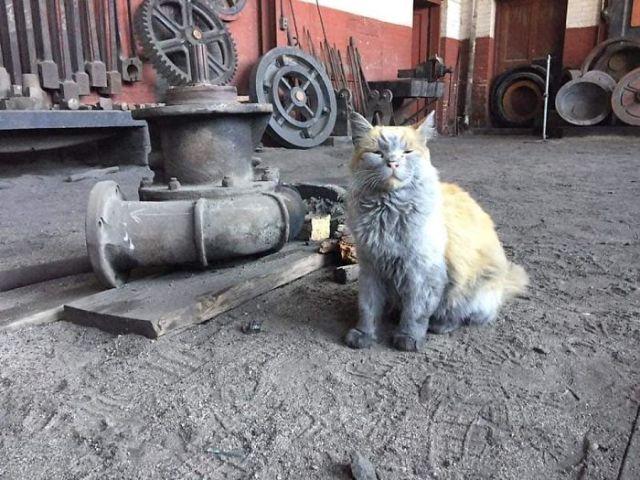 Все хотят помыть эту кошку, но это просто бесполезно..