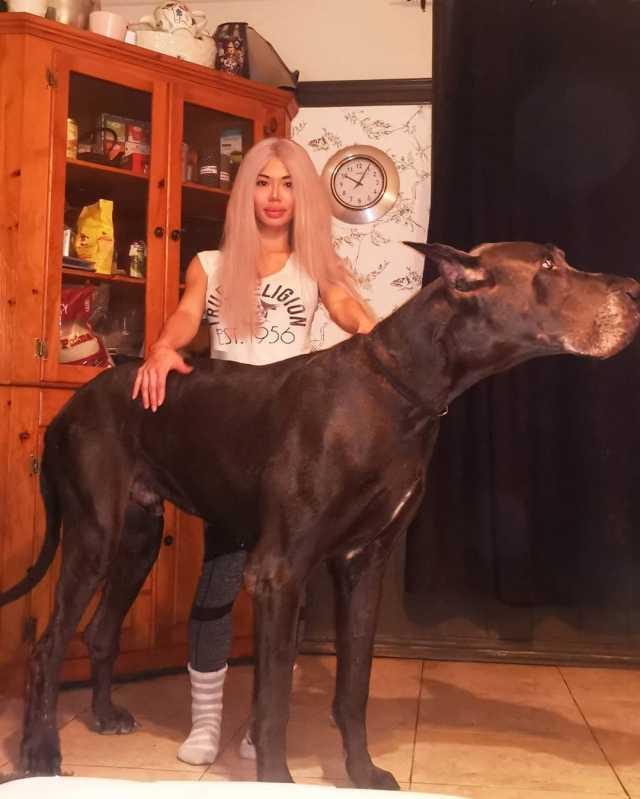 Немецкий дог Зевс, которого со стороны легко принять за лошадь