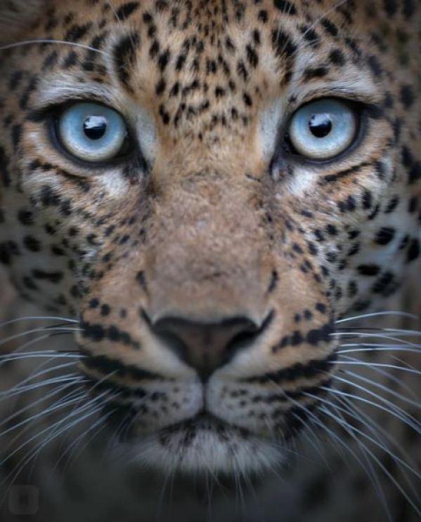 «Красота без прикрас». Таких портретов животных вы еще не видели