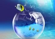 Рыба не видит воды