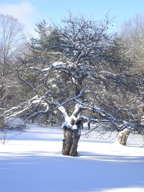 Tree and Snow at Earthdance