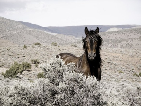 Wild War Horse (Photo © Cynthia Smalley, all rights reserved.)