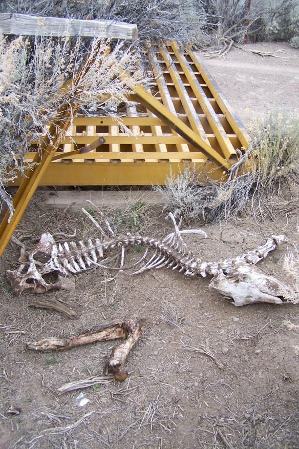 Dead wild horse (Photo © Craig Downer)