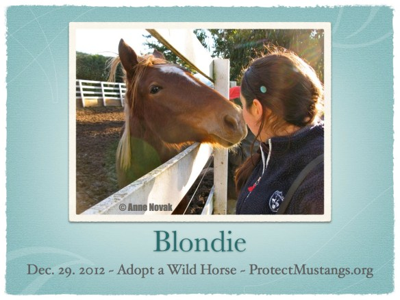 PM Blondie Adopt Dec 29 2012.001
