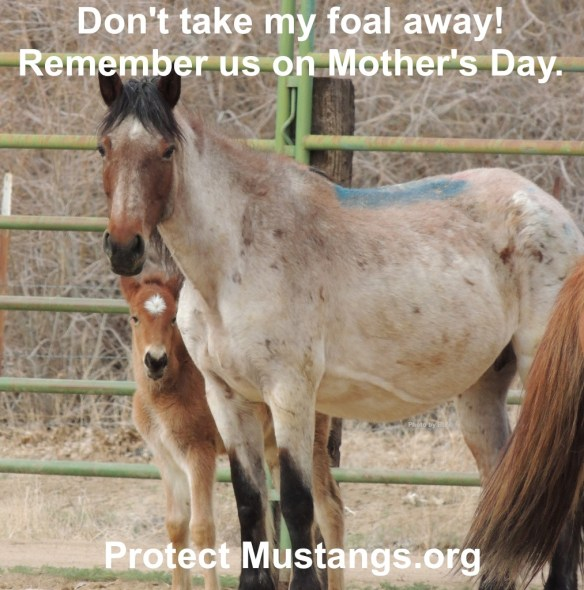 Sequester means stop fiscal fiasco. Freeze the roundups. Return all wild horses and burros to the range.