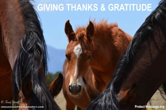 PM Gratitude Thanksgiving 2013