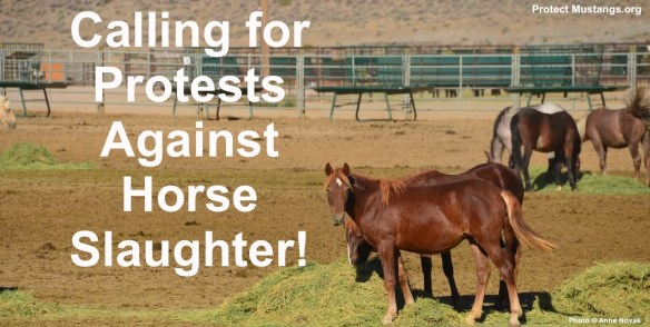 STOP Horse Slaughter now!