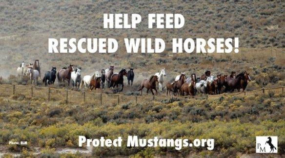 PM Feed WIld Horses