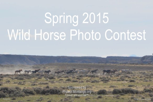 PM Contest Photo Spring 2015
