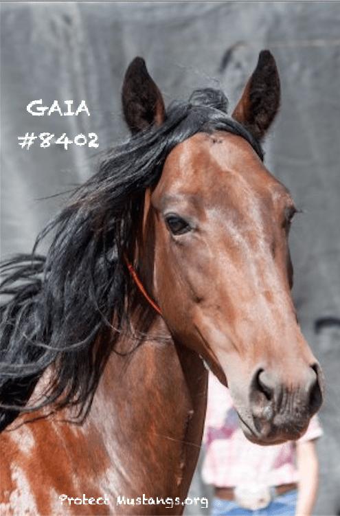 PM IA GAIA #8402 Carson July 2016