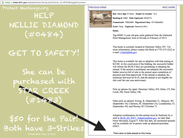 PM Nellie Diamond #0484 No Bidder Screen Shot 2016-08-03 at 2.17.51 AM