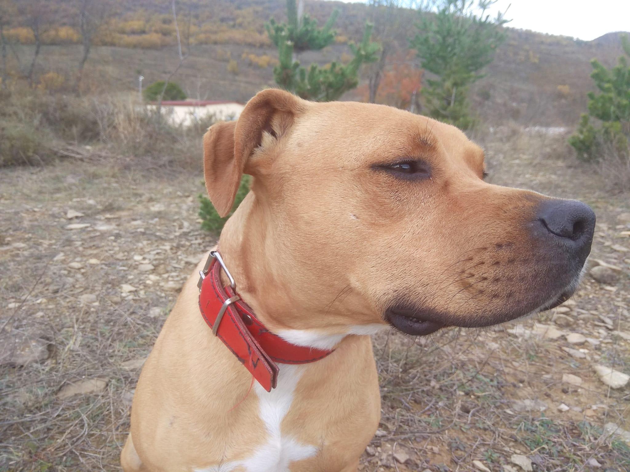KAI EN ADOPCIÓN EN LA PROTECTORA DE JACA ANIMALES ABANDONADOS