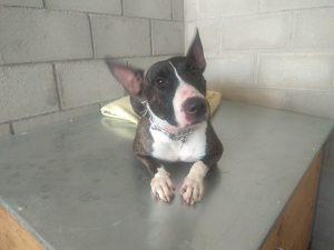 tara perra en adopción en la protectora de jaca