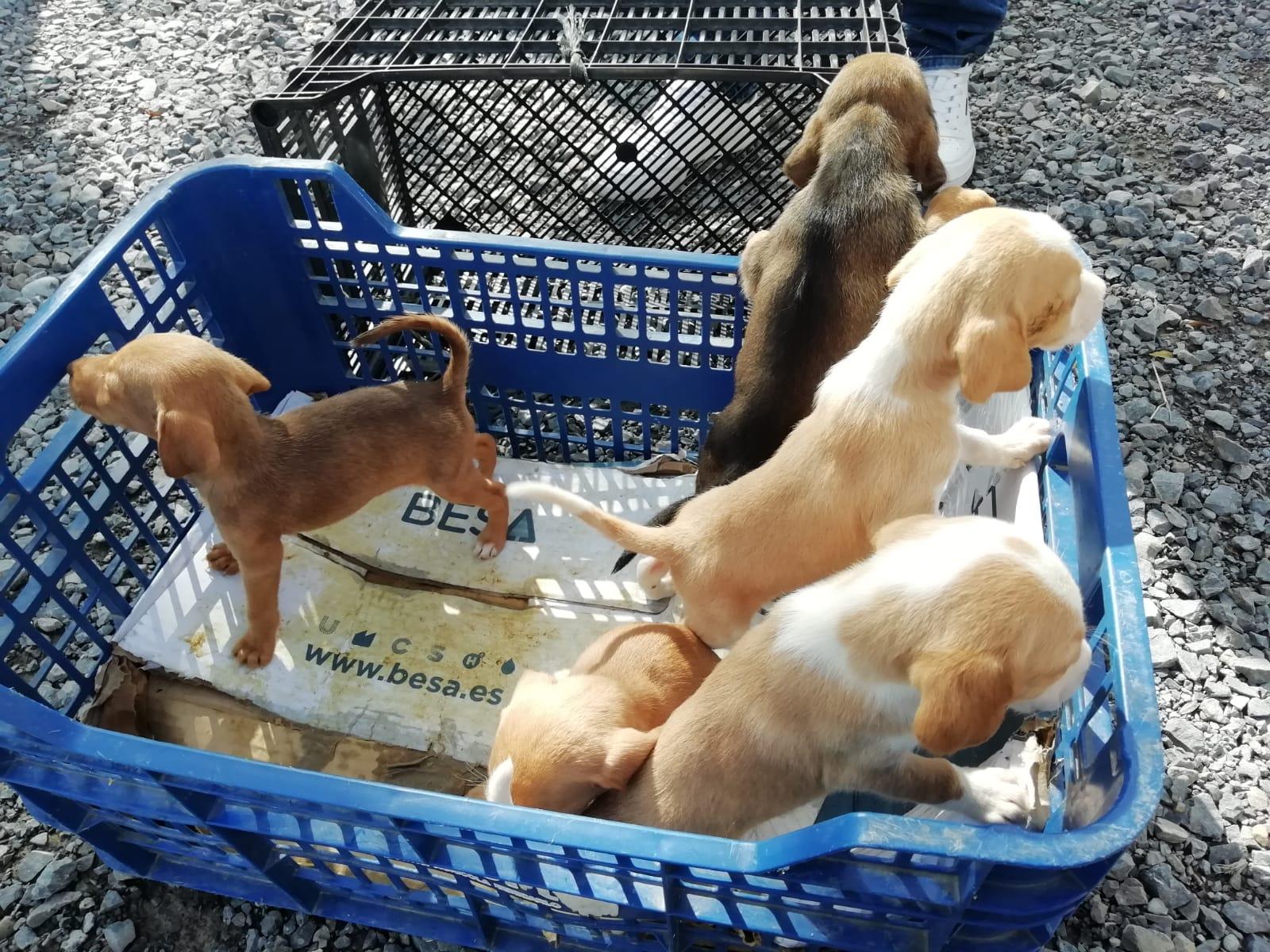 perra en adopción en la protectora de jaca