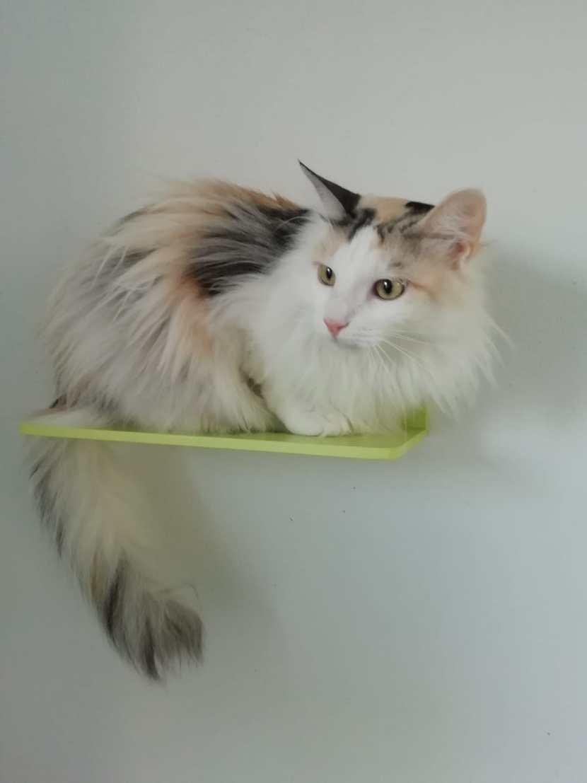 layla en adopción en la protectora de jaca gata