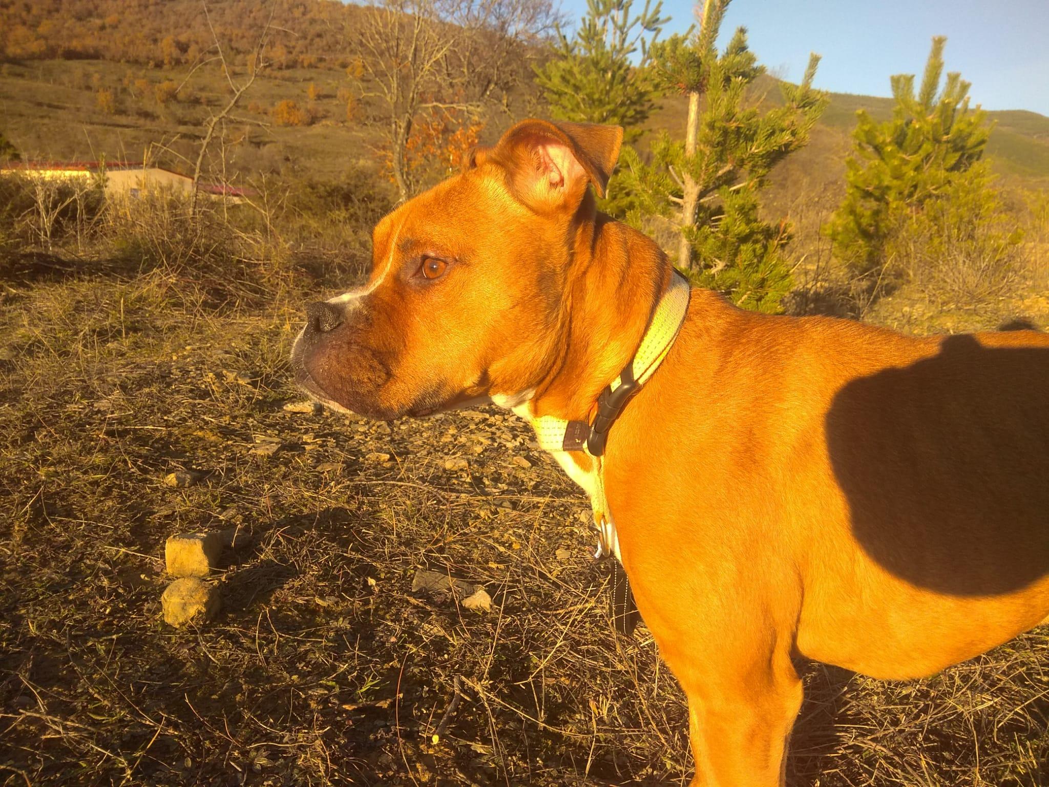 BRUTUS EN ADOPCIÓN EN LA PROTECTORA DE JACA ANIMALES ABANDONADOS