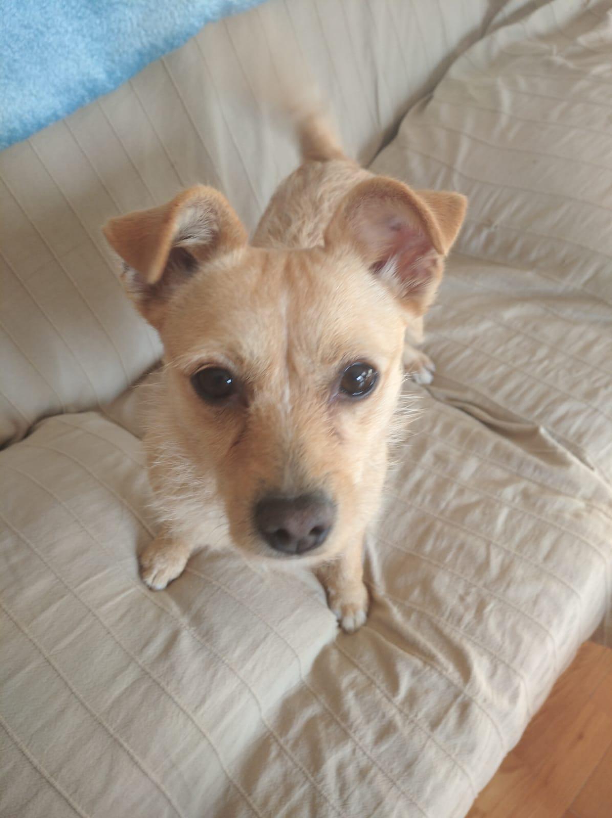 Cloe dic19 h perro en adopción en la protectora de animales de jaca 1