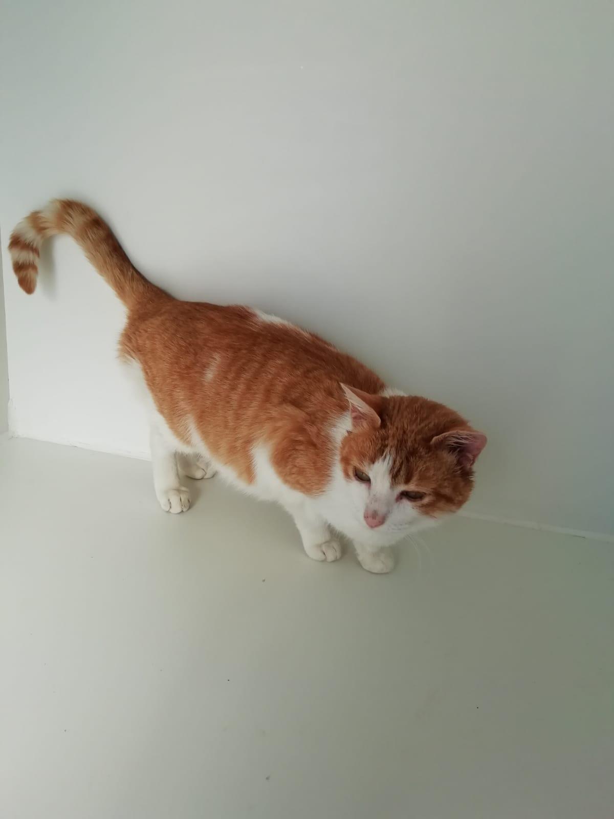 chispa 2221 gata en adopción en la protectora de jaca feb20