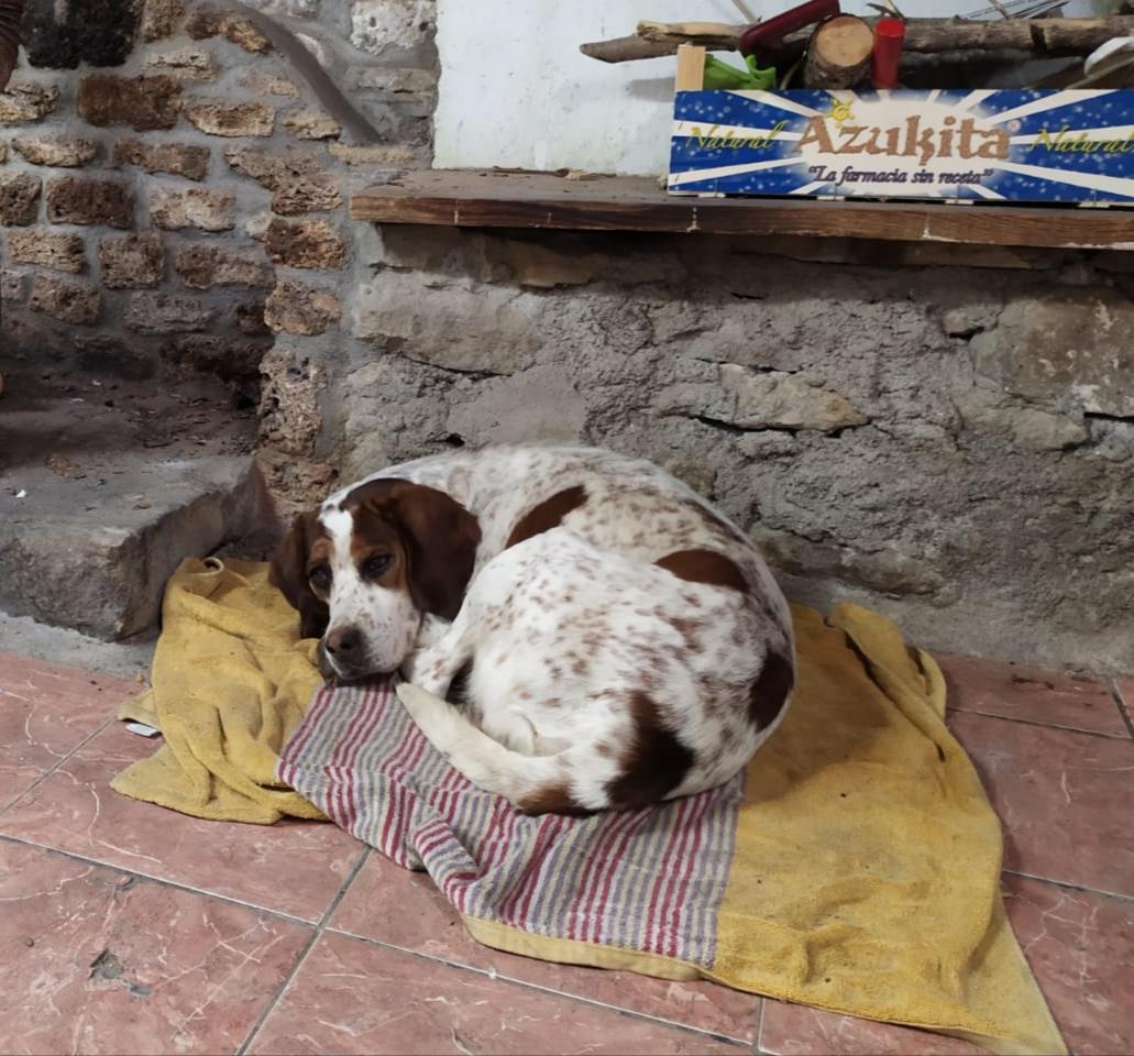 RAYO ENE20 PERRO EN ADOPCIÓN EN LA PROTECTORA DE ANIMALES DE JACA 2