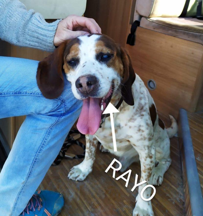 RAYO ENE20 PERRO EN ADOPCIÓN EN LA PROTECTORA DE ANIMALES DE JACA PORTADA