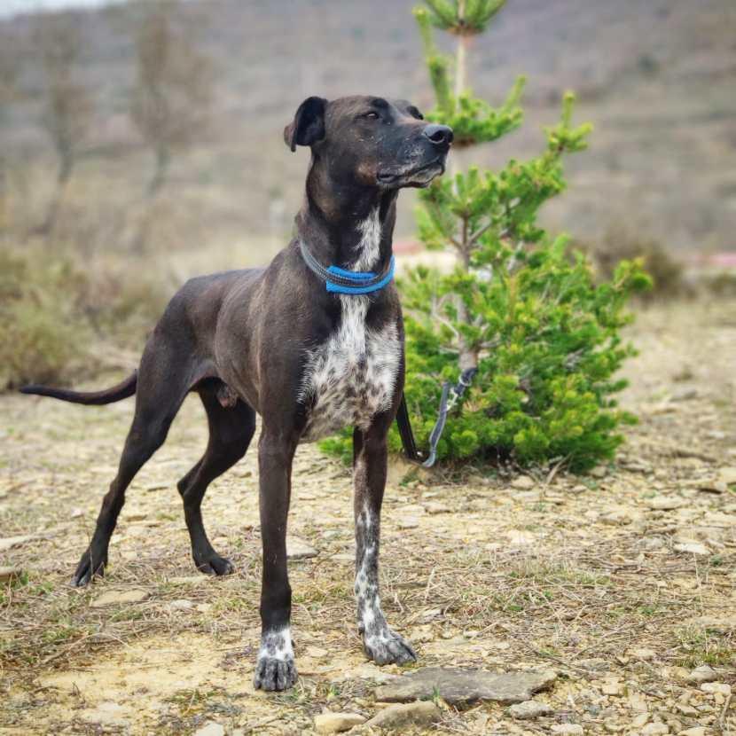 xoco 1 dic19 perro en adopción en la protectora de animales de jaca 234