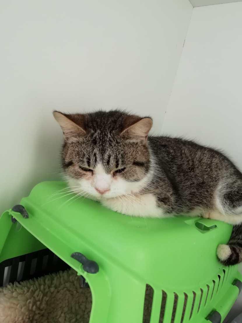 cherri gato feb20 portada en adopción en la protectora para animales abandonados de jaca APAP