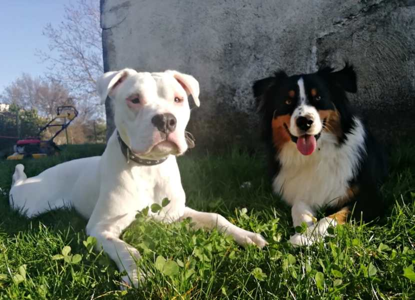 White portada mar20 perro en adopción en la protectora de Jaca.jpg