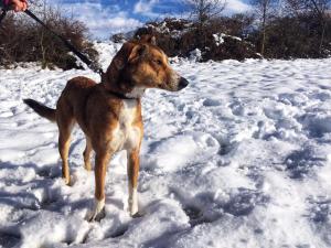 talia perra pastor en adopción en la protectora de jaca dic12 PORTADA