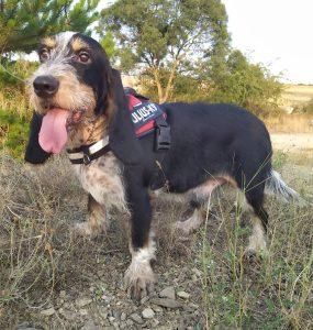 perro macho grifón en adopción en la protectora de animales de Jaca 2021