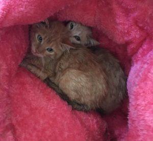 gatitos en adopción en la protectora de animales de Jaca huesca 2021