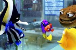 the real fish of Finding Nemo