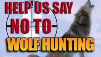 protect the wolves, keep wolves on esl, oppose welfare ranching