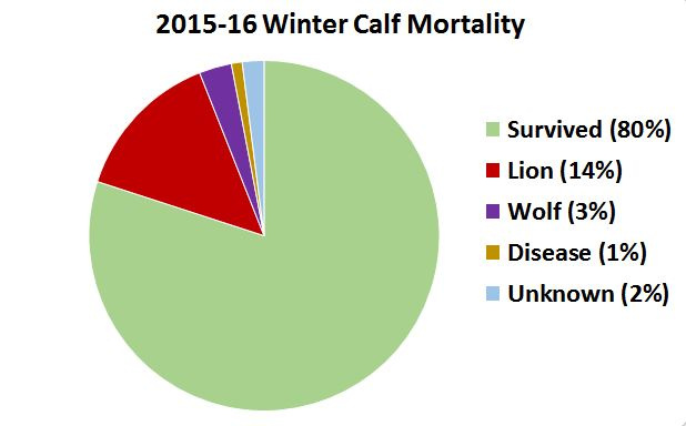 2015-2016 calf mortality graph