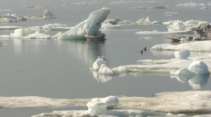 Arctic Data Center