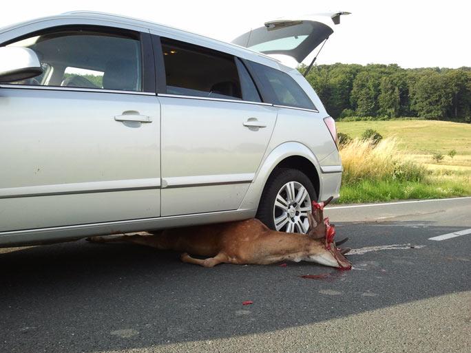 Protezione animali selvatici