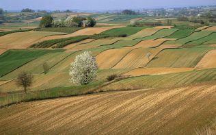 Zaorane pola i kwitnace dzikie drzewa owocowe na Roztoczu (Plowe